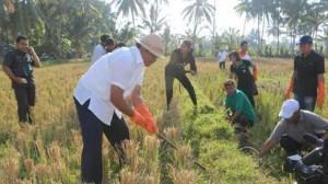 Wakil Gubernur Bali Ketut Sudikerta saat mengikuti gerakan pengendalian hama tikus bersama para petani subak Desa Sembung Mengwi Badung, Rabu (22/10/2014).
